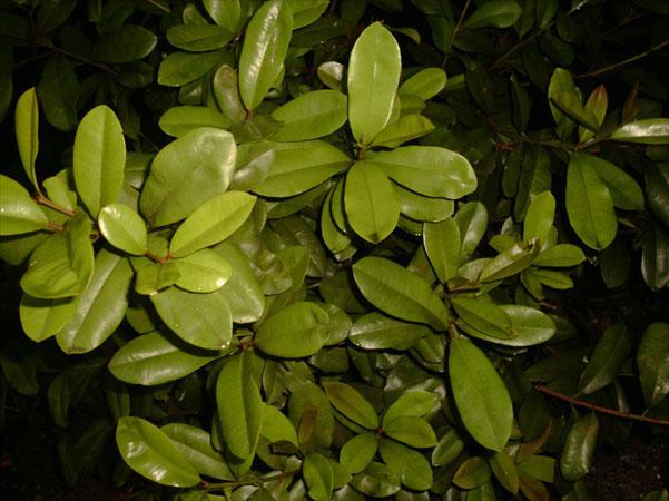 Plantes M 233 Dicinales Alicaments Archipel Des Sciences