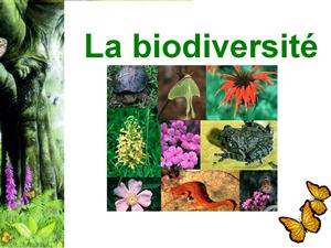 "Diaporama ""La biodiversité"""