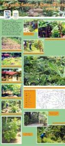 Jardin bonheur à Sainte-Marie (Martinique)