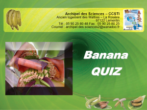 Quizz Banane