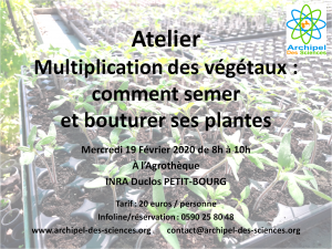 Atelier multiplication plantes 19/02/2020