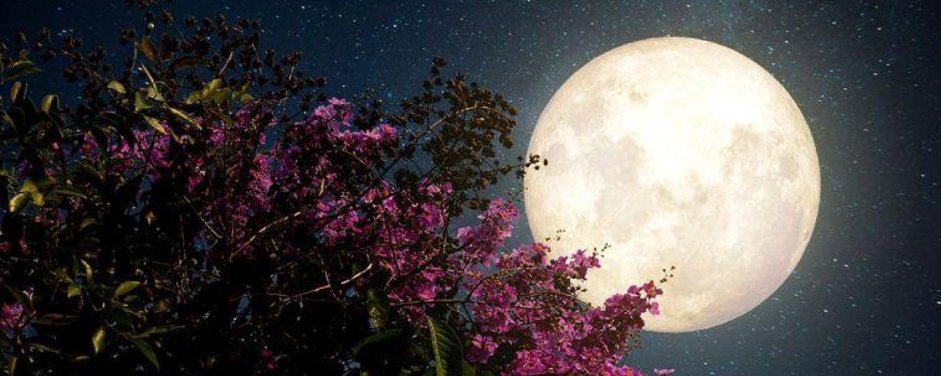 Impact de la Lune et du Soleil sur les plantes